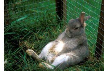 Kaninchen: Zucht, Wachsen, Fütterung, Fürsorge