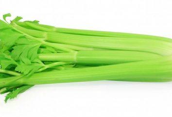 céleri vert: propriétés utiles et contre-indications