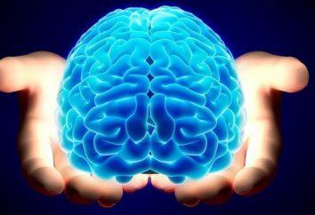 A la recherche d'une réponse: combien de poids le cerveau humain?