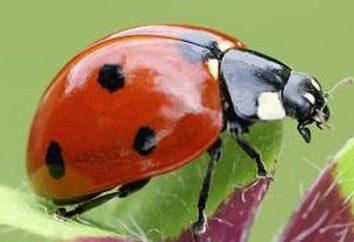 Il mondo degli insetti. La larva di una coccinella