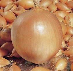 Lorsque les oignons sont plantés avant l'hiver? Bien sûr, en Octobre!