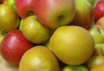 Várias receitas para donas de casa como fechar para a compota de inverno de maçãs