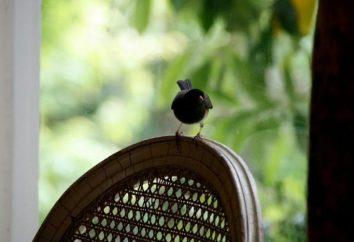 presagi Folk sugli uccelli come messaggeri avvertono gli uccelli?