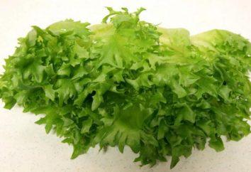 Frillis salada: descrição e características de cultivo