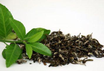 Kto jest przeciwwskazany w zielonej herbacie? Zielona herbata: korzyści i szkody