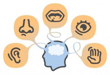 Le premier système de signaux – quel est-il? Le premier système de signal d'une personne selon Pavlov