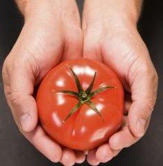 Pomodoro – un frutto o una verdura? Esaminiamo