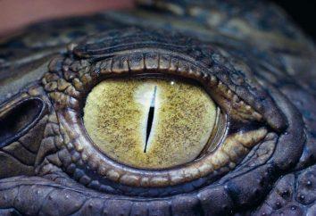 Il più grande coccodrillo viveva nelle Filippine