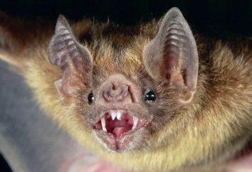 Bat wsiadł do mieszkania. Znaki przewidują przyszłość