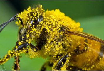 I doni della natura per la tutela della salute: polline – proprietà e applicazioni utili