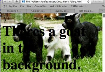 local de assentamento: como fazer com que a imagem de fundo html