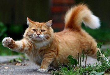 Man-Cat, Cat-kobieta: zgodność par