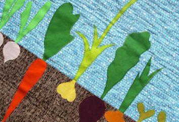 """Aplicação """"Vegetais"""": o que você precisa saber, começando a trabalhar?"""