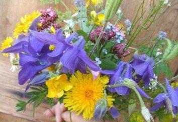 Che importa il numero di fiori nel mazzo: pari e dispari