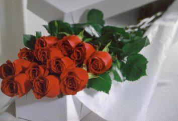 Długa Róża – królowa kwiatów świata