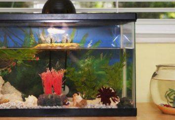 Que é melhor para o filtro do aquário para escolher?