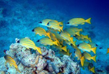 escola de peixe – o que é?