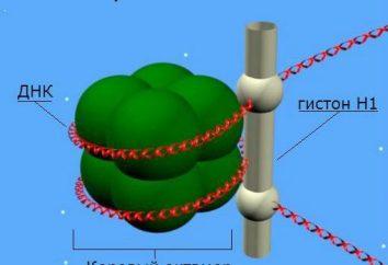 Histony – to … Rola histonów w DNA