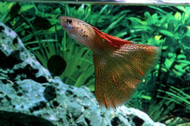 fische aquarium füttern