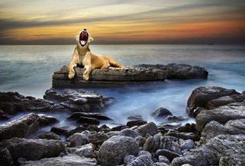 Ce qui rêvait d'un lion – un symbole de puissance