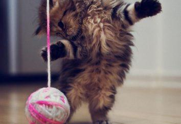 Bestes Geschenk zu Ihrem Lieblings – Spielzeug für eine Katze mit seinen eigenen Händen