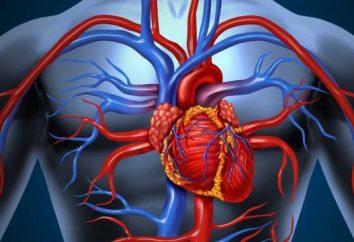 Czynniki ryzyka i zapobieganie nadciśnieniu. Objawy, diagnoza i leczenie nadciśnienia tętniczego