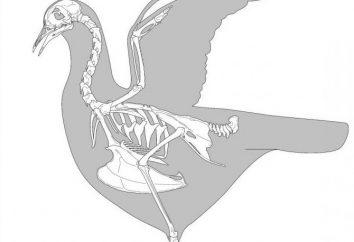 El esqueleto de un ave: las características estructurales