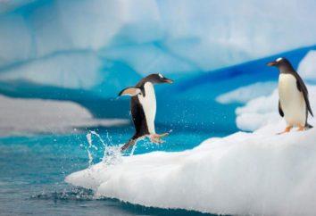 Qui peut être vu sur la glace? Évaluation des réponses populaires