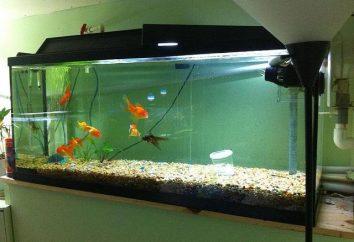 Quelle est la température devrait être dans l'aquarium et comment l'entretenir?