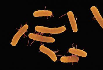 Salmonellosi – che cos'è? Salmonellosi: sintomi, il trattamento e la prevenzione