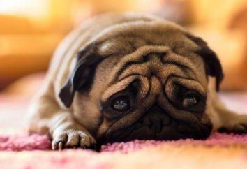 8 choses qui peuvent vous faire sentir misérable
