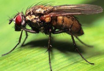 Des moyens efficaces de mouches