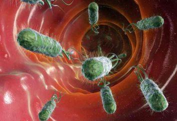 Las bacterias útiles y perjudiciales. Las bacterias en la vida de una persona