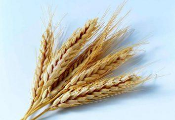 Zdrowa żywność: kalorie kasza pszenna