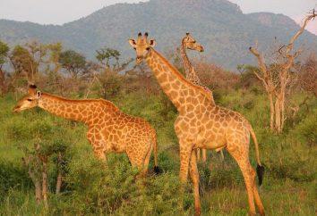La più grande riserva naturale in Africa. I 10 parchi e riserve nazionali in Africa