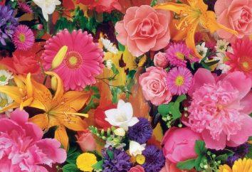 Interpretazione dei sogni: il sogno di fiore della felicità?