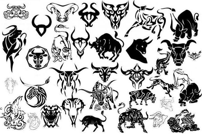 Tatuaż Byk Opis Wartość Szkice