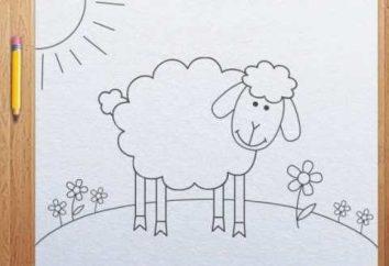 Jak narysować owce. Rysunek etapy