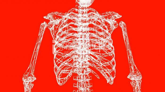 Anatomie - Was ist die Wissenschaft? Geschichte der Anatomie