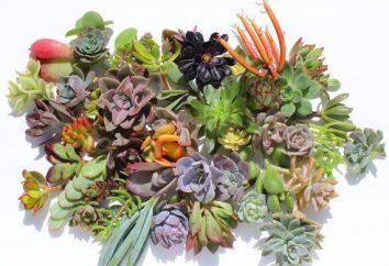 Fiore Young: descrizione delle varietà e specie