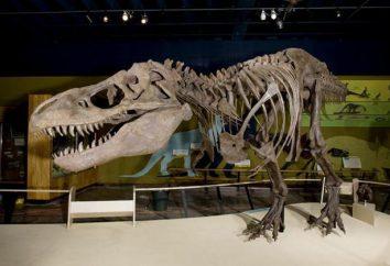 Où se trouve le plus célèbre musée des dinosaures dans le monde?