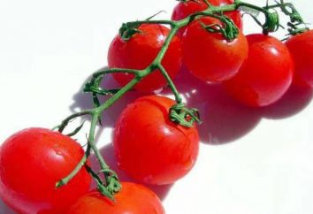 Descrizione Pomodoro San Valentino. piantina di coltivazione, recensioni