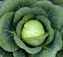 La ricetta più semplice per multivarka verza brasata