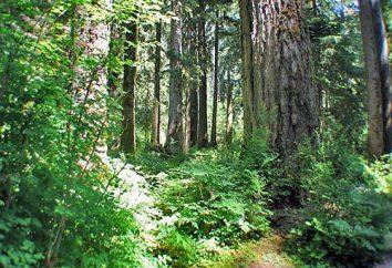 Forêts à feuilles larges: caractéristiques, relief, plantes et animaux