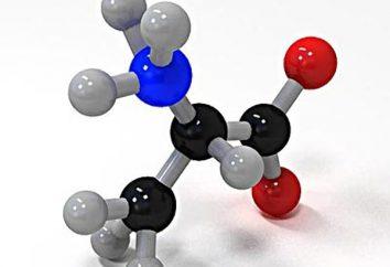 Les acides aminés essentiels pour la croissance musculaire