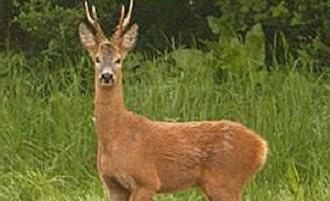 Zwierzęta leśne szeroko zaległe – duża różnorodność gatunkowa