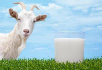 La leche de cabra: el contenido calórico por 100 gramos, propiedades útiles