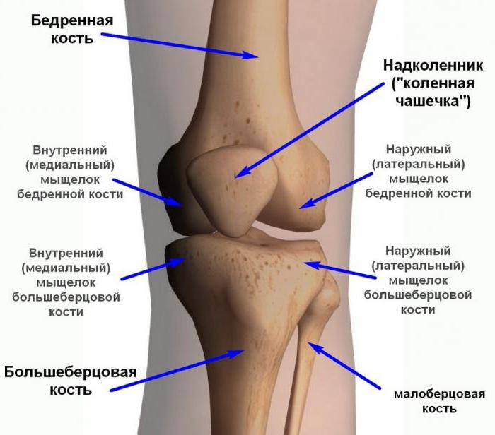 La articulación de la rodilla: ligamentos y lesiones asociadas con ...