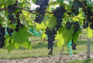 uve riparo adeguati per l'inverno negli Urali