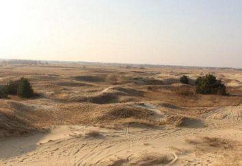 Tajemnicza pustynia Oleshky Sands niedaleko Chersoń (Ukraina)